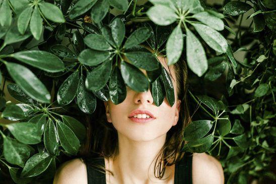 antiestres plantas