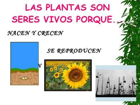 plantas seres vivos